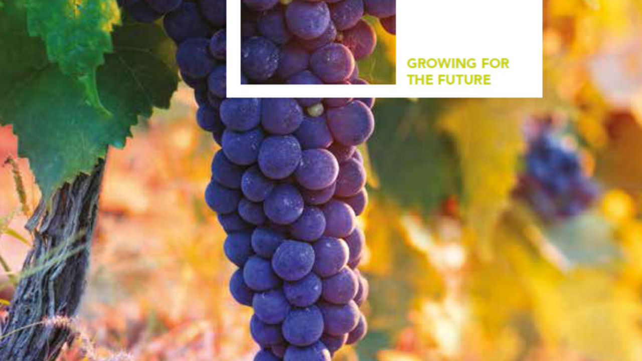 Certis' guide to vine growing crop protection