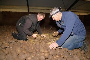 two processes inspect store potatoes